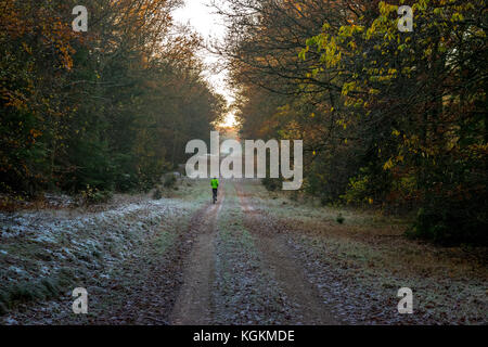 Autumn jogging through the forest - Stock Photo