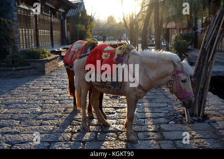 Horses for riding is take a rest in Shuhe area - Stock Photo