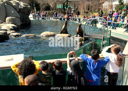 Children watching sea lions in Central Park Zoo, New York City. - Stock Photo