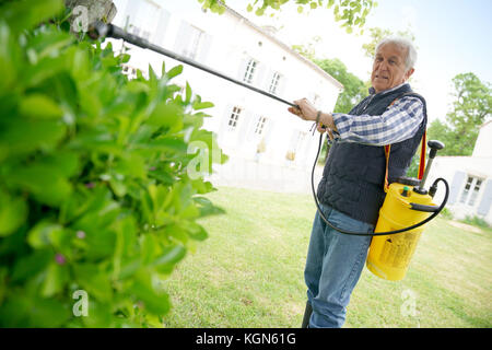 Senior man in garden spraying insecticide on trees and plants - Stock Photo
