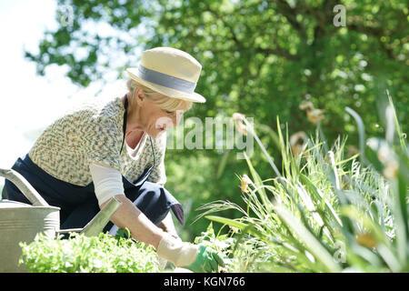 Senior woman gardening on beautiful spring day - Stock Photo