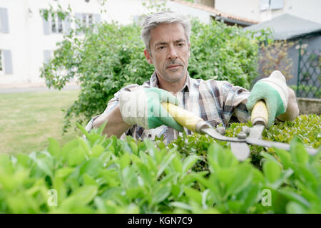 Mature man in garden trimming hedges - Stock Photo