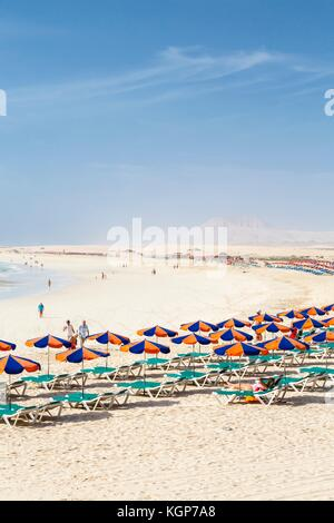 Row of sunbeds and parasols on sandy beach Bajo Negro, Fuerteventura, Canary Islands - Stock Photo