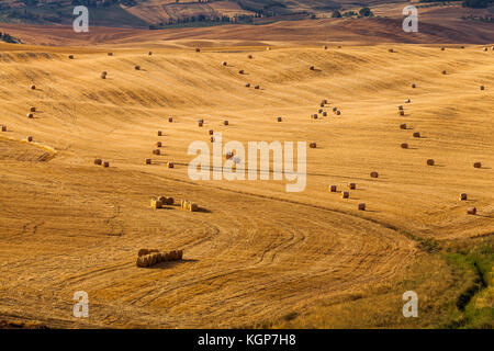Lots of hay bale rolls on susnset in a Tuscany field in Italy - Stock Photo