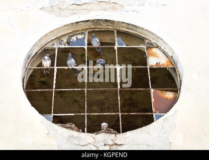 Pigeons sitting on a broken glass famre - Stock Photo