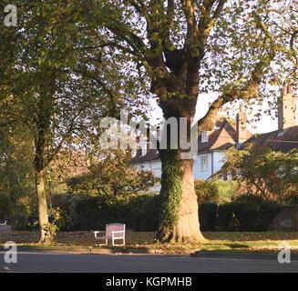 A roadside seat in the sunshine under autumnal plane trees beside the High Street in Tenterden. Tenterden, Kent. - Stock Photo