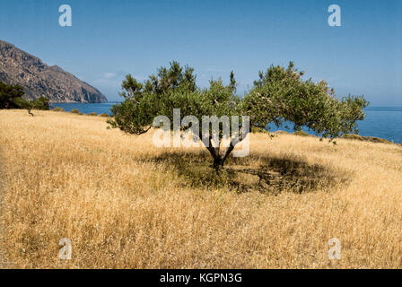 Greece, Aegean Islands, diafani is a small harbor surrounded by olive trees on the island of Karpathos - Stock Photo