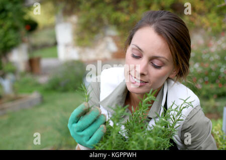 Young woman planting aromatic herbs in garden - Stock Photo