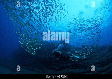 Scuba diver and fish school at Dado dive site in Ibiza (Balearic Islands, Spain) - Stock Photo