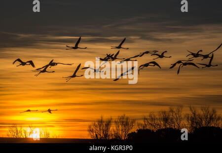 sunset with flying flamingos in the Camargue , France - Stock Photo