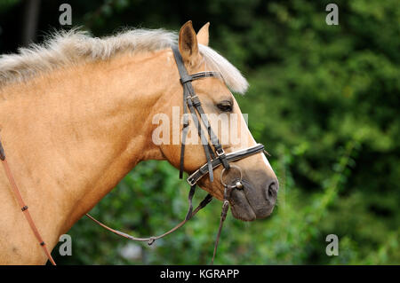 Head of horse close up. - Stock Photo