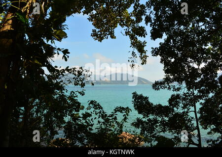 Trail in the middle of the Atlantic Forest - Stock Photo