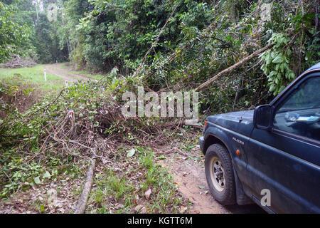 Fallen tree blocking track for four-wheel-drive vehicle through rainforest, Woonooroonan National Park, Queensland, - Stock Photo