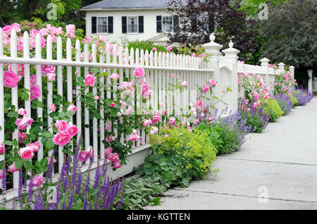 Climbing roses on fence and colorful garden border. White picket fence, pink, blue, green and purple flowers. - Stock Photo
