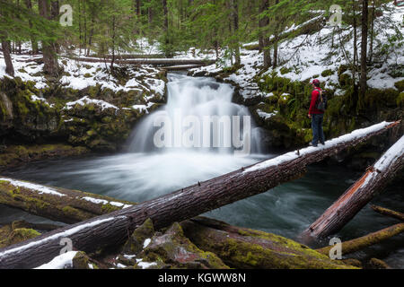 A man stands on a log admiring Whitehorse Falls waterfall during winter in Oregon. - Stock Photo
