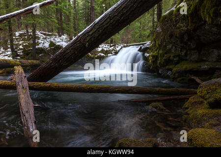 Whitehorse Falls waterfall is framed by logs in the mossy forest of Oregon. - Stock Photo