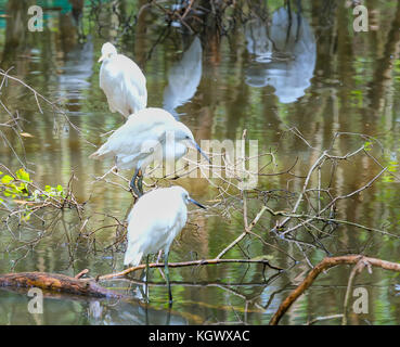 Stork relaxing in the nature reserve. These birds are grouped and should be preserved in the natural world - Stock Photo