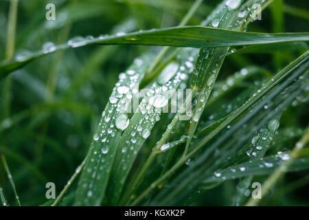Macro of brilliant raindrops on grass. - Stock Photo
