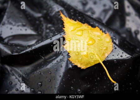 Close-up Of Yellow Birch  Tree Leaf On Black Plastic Bag. Rain drops. Seasonal Garden Work. Abstract - Stock Photo