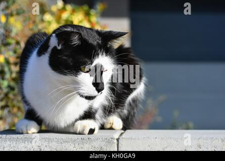 Cat sitting on the wall. The animal rests in the sun. natural blurred background. - Stock Photo