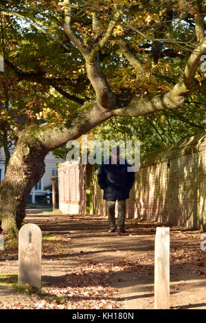 an elderly gentleman walking along a pathway under some autumn trees on the Blicling estate in Norfolk. National - Stock Photo