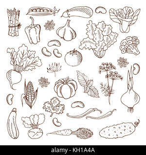 A collection of cartoon vegetables. illustration. A set of icons of different vegetables. Black outline. Isolated.Web - Stock Photo