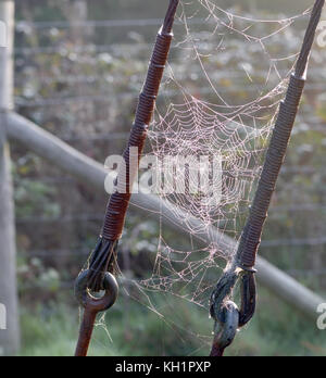 Dew-covered spiders' webs slung between steel cables supporting an electricity pole. Bedgebury Forest, Hawkhurst, - Stock Photo