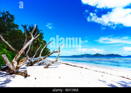 white dead branches in the white sand of the beach at anse severe, la digue, seychelles - Stock Photo