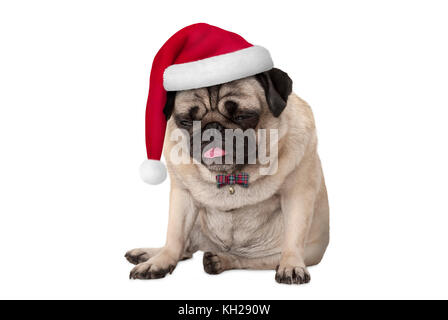 funny grumpy faced pug puppy dog with red santa hat for Christmas sitting down, isolated on white background - Stock Photo