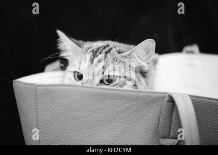 Cute cat looking outside from inside bag. - Stock Photo