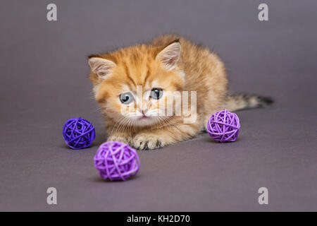 Red British kitten playing with balls on grey background - Stock Photo