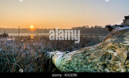 Sunrise over a misty pond with lying tree trunk in the foreground. Morning grass with white frost on the shore of - Stock Photo