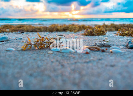 close up of seaweed and seashells on a sandy beach as the sun rises over the ocean in the background - Stock Photo