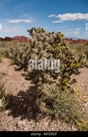 Green blooming cactus in Valley of Fire State Park - Stock Photo