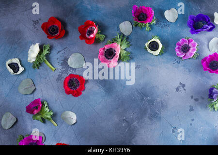 Fresh colorful Anemones flowers heads with green leaves, copy space on gray stone background - Stock Photo