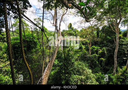 Kakum National Park is a 375 square km national park located in the Central Region of Ghana. Kakum National Park - Stock Photo