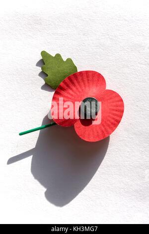 Royal British Legion poppy on white background, Surrey, England, United Kingdom - Stock Photo