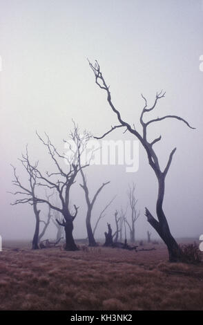 Dead trees on dry lake bed - Stock Photo