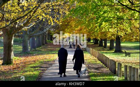 Two woman walking a dog through an autumn scene in Wollaton Park Nottingham England UK - Stock Photo