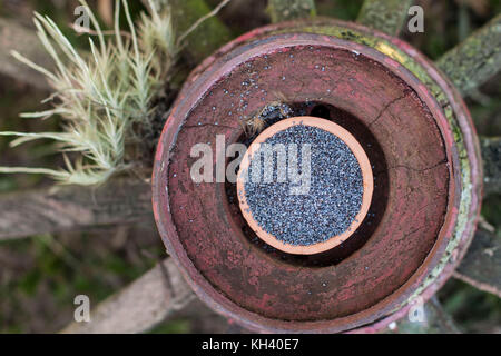 Purple poppy seeds in clay pot over round rustic bowl with grass on the background - Stock Photo
