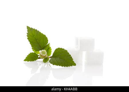 Fresh Aztec sweet herb Lippia Dulcis with sugar cubes. Isolated on white background - Stock Photo
