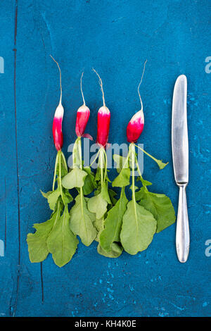 Fresh small radishes with a knife over a blue background - Stock Photo
