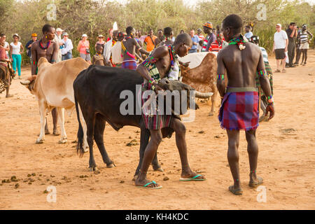 TURMI, ETHIOPIA - 14/11/16: two men from the hamar tribe, getting the bulls into position ready for the bull jumping - Stock Photo