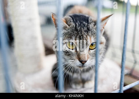 Choszczno, Poland, 12 november 2017: A cat behind bars in a shelter for homeless animals. - Stock Photo