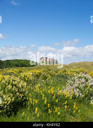 Bamburgh Castle Northumberland north east England UK medieval fortress in summer Stock Photo