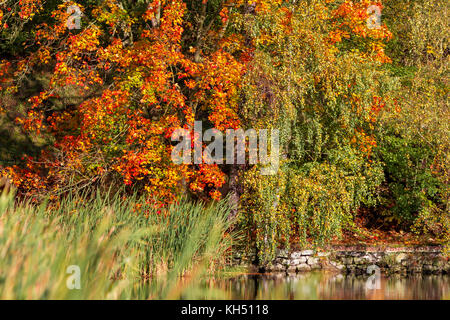 Herbstfarben Ahorn - Stock Photo
