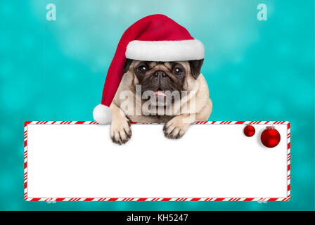 cute smiling Christmas pug puppy dog with santa hat, hanging with paws on blank sign. on blue background - Stock Photo