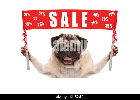 happy cute pug puppy dog holding up red promotional  banner sign with text sale % off, isolated on white background - Stock Photo