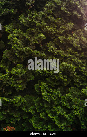 Creative layout made of green leaves. Flat lay. Nature - Stock Photo