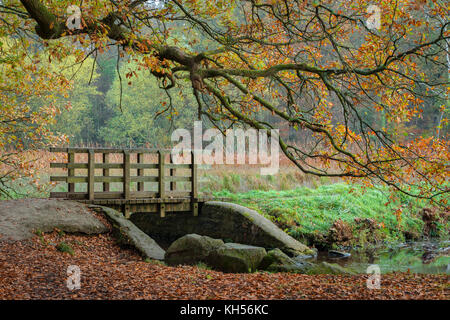 Wooden footbridge over a stream in the Forest of Dean. - Stock Photo